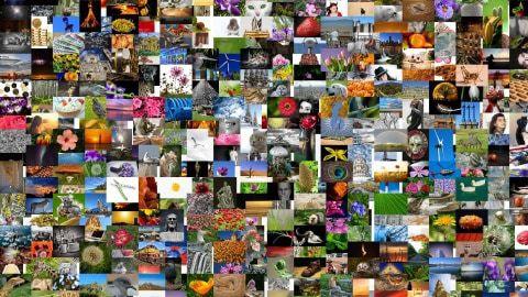 Bydlení a zahrada – články z internetu – červenec 2017
