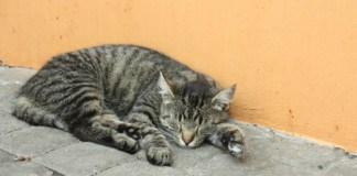 Venkovní betonová dlažba a na ní leží a spí kočka