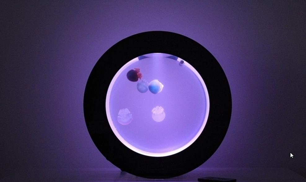 Medúzárium (akvárium pro medúzy), Orbit 20