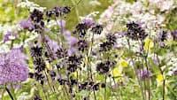 nebojte-se-tmavych-barev-i-cerne-kvety-umi-rozzarit-zahradu-novinky-cz-bydleni-10-9-2016