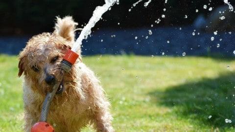 S vodou zacházejme opatrně – pomohou nám čerpadla