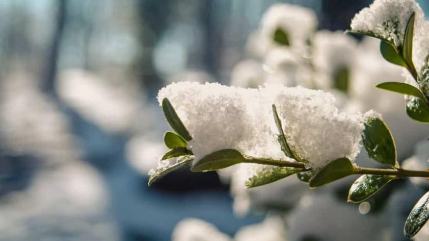 Zahradní kalendář prací – březen vzahradě