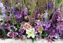Letní Flora Olomouc 2018 - květiny