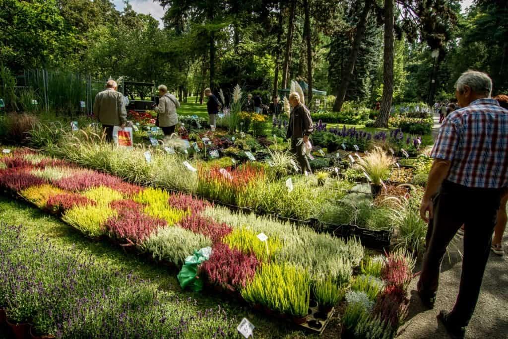 Flora Olomouc - podzimní trhy 2019