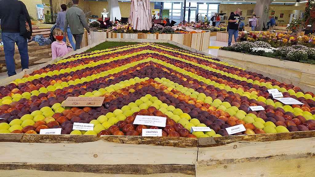 Podzimní Flora 2020 - expozice podzimních plodů v hale A