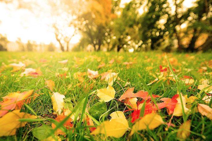 Podzimní listí - ilustrativní foto